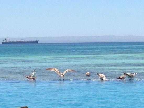 Costabaja Resort & Spa: Gaviotas, en alberca infitnita de club de playa Costa Baja