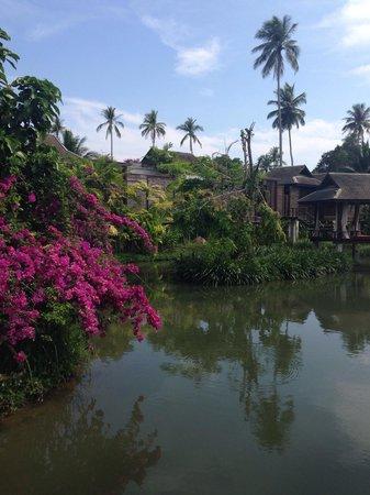 Anantara Mai Khao Phuket Villas: Пруд