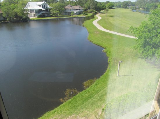Sea Palms Resort & Conference Center: View down the golf hole from our window (with the Alligator)