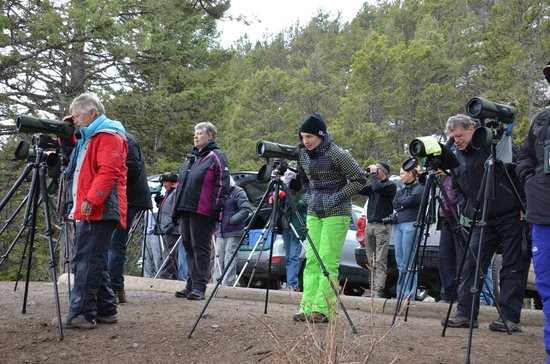 The Wild Side Wildlife Tours & Treks: New wolfwatchers about to see their first wolves