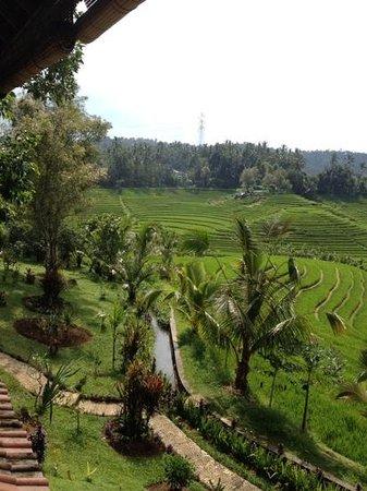 Warung Tepi Sawah: Lekker, goedkoop eten met dit magistrale uitzicht!