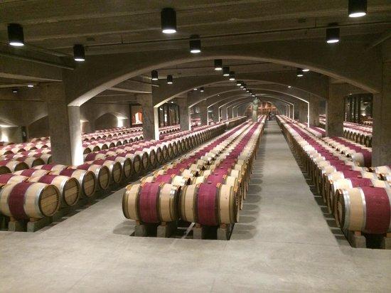 Robert Mondavi Winery: Barris de vinhos na adega refrigerada.