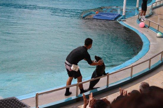 Underwater World and Dolphin Lagoon: Dolphin Lagoon