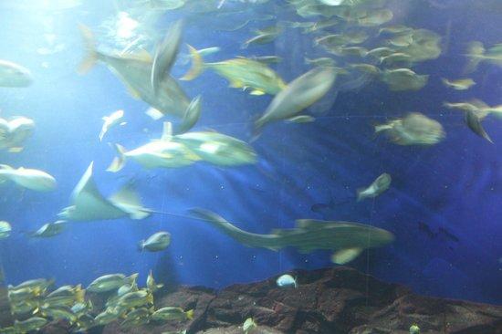 Underwater World - Picture of Underwater World and Dolphin Lagoon ...