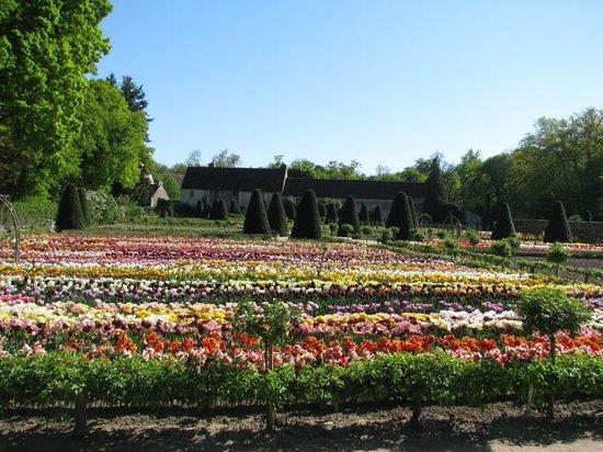 Chateau de Chenonceau: Champ de tulipe