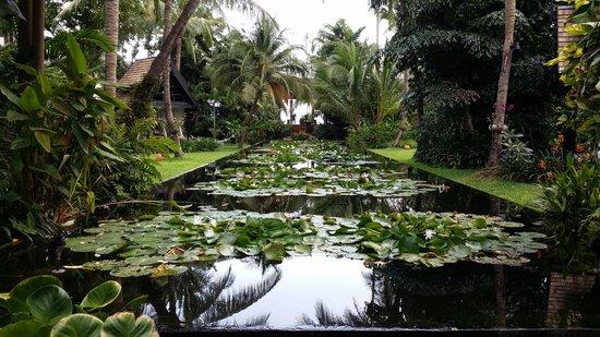 Anantara Bophut Koh Samui Resort : Lily pond