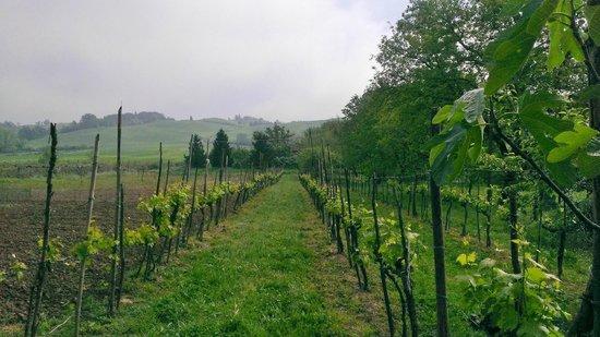 Castello di San Fabiano: Wine country