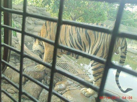 Zoobic Safari: Close encounter