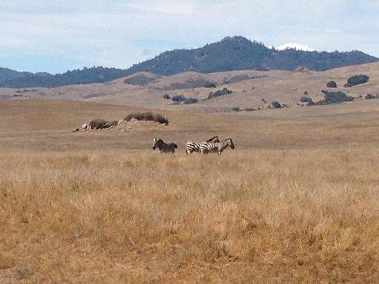 Grounds Hearst Castle Zebras Sept. 2013