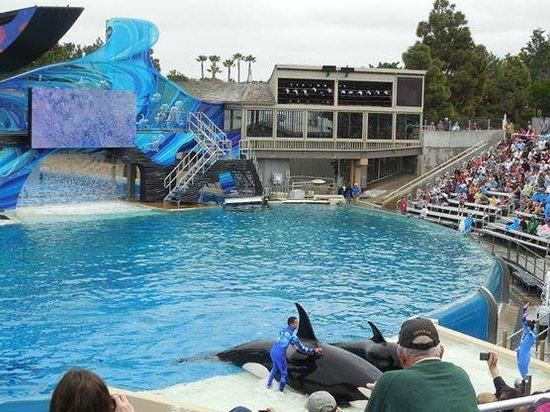 SeaWorld: Show - Baleias