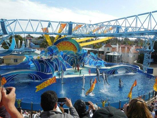 SeaWorld: Show - Golfinhos