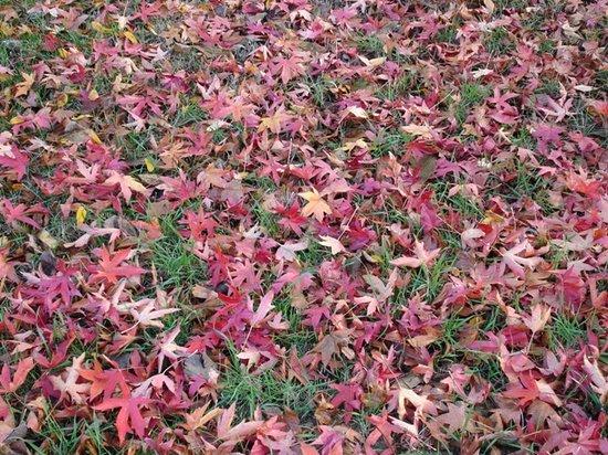 B&B CollePepi : Colori d'autunno