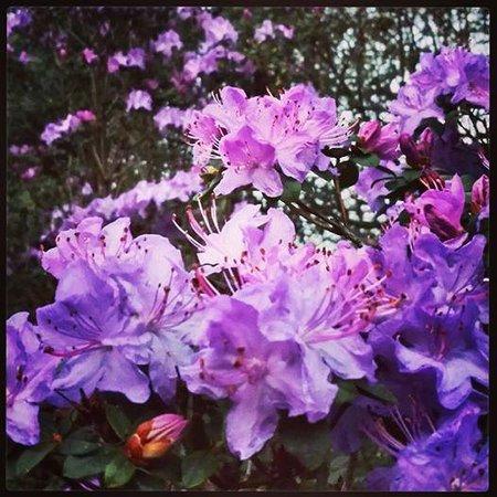 Penpark: The garden in spring