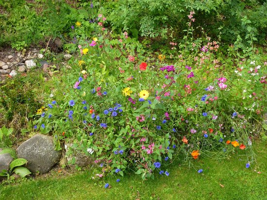 Caputh, UK: Beautiful Wildflowers in the Hostel garden!