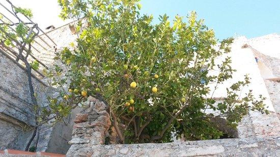 B&B Svegliarsi a Verezzi: La pianta di limoni sul terrazzo della camera blu