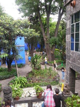 Musée Frida Kahlo : garden of frida kahlo museum