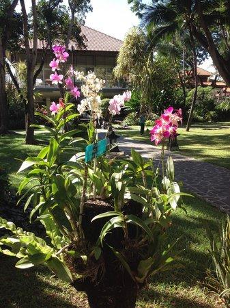 Ramada Bintang Bali Resort: Orchids