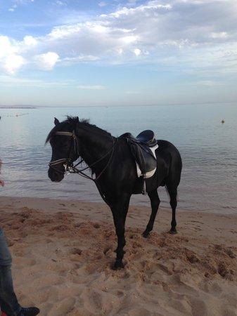 Swiss Inn Resort : Horseriding with Dahabhorses at Swiss Inn Hotel