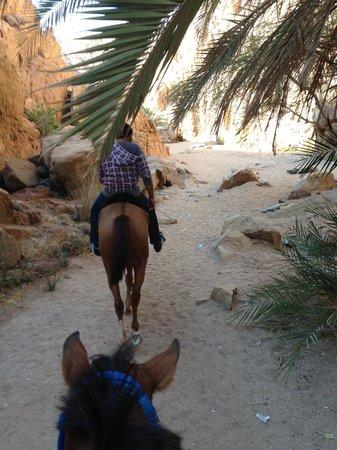 Swiss Inn Resort : Canyon trail with Dahabhorses