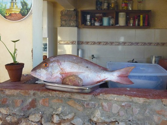 Hostal Casa Mia: Red Snapper for dinner