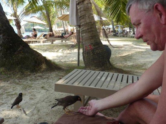 Cape Panwa Hotel : Adorables oiseaux