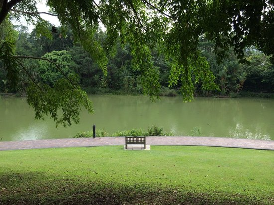 Jardines Botánicos de Singapur: Yes you can lay down on the grass!