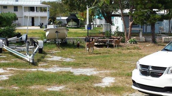 National Key Deer Refuge: Louis Balderston and Stephanie Balderston at the national key deer sanctuary in the Florida Keys