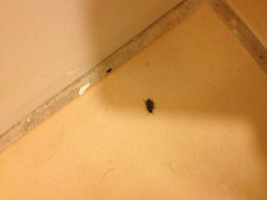 Knights Inn Abilene : Bugs in the bathroom. Cobwebs all over the room