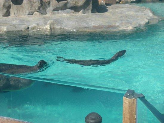 Siam Park: Seals