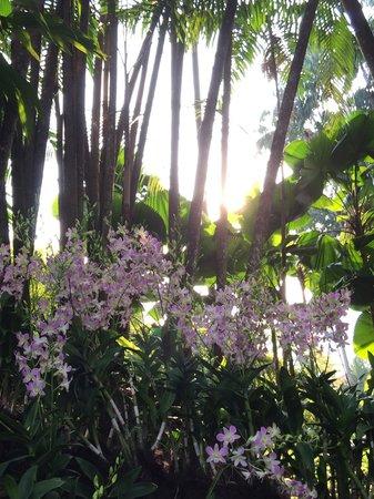 Jardines Botánicos de Singapur: Trees, bushes, orchids, birds, little reptiles, animals