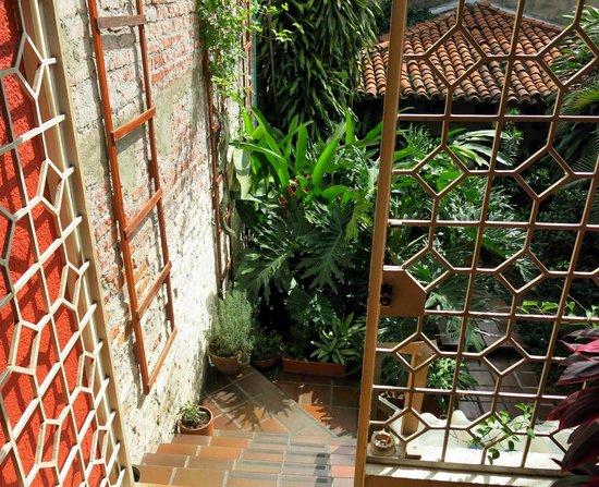Iguana Hostel: In the garden