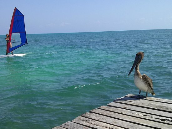 Tropical Paradise Hotel: Sitting at the end of the pier with one of the locals watching a windsurfer.