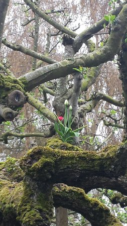 Shutter Tours - Day Tours : Tulips in trees