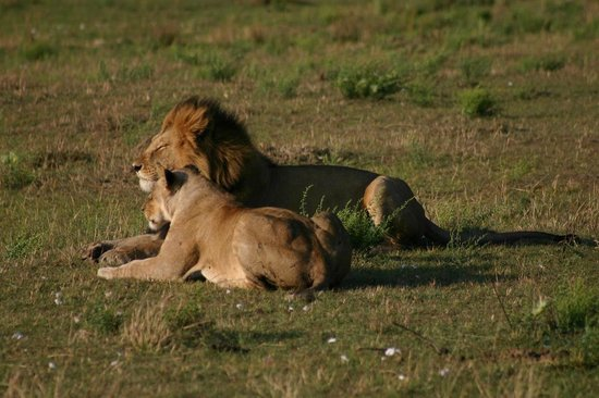 Katuta's Safaris - Day Tours