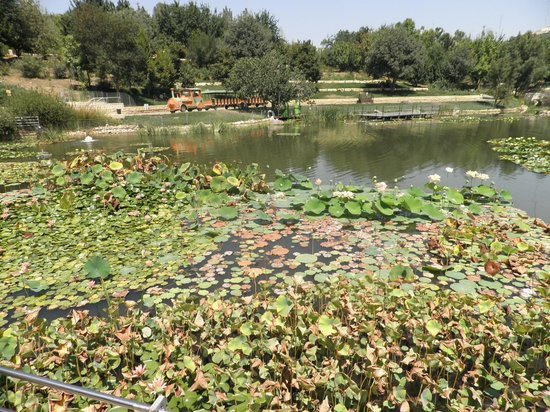 Jerusalem Botanical Gardens : Lake and little train to tour the Garden