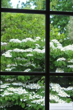 La Bidetterie : Garden from breakfast room