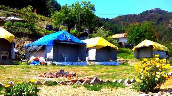 Camp Dhanaulti Magic