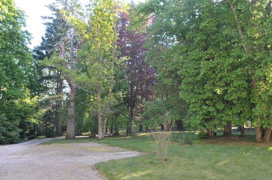Chateau le Corvier: les arbres