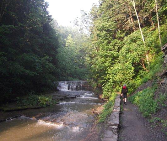 Robert Treman State Park: nice riverside walk thru trees