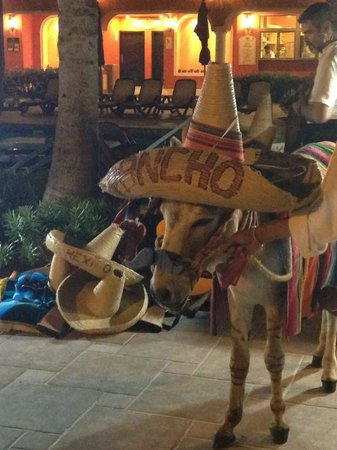 The Royal Haciendas All Suites Resort & Spa : This poor animal