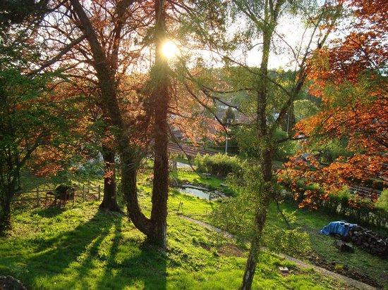 La Ferme en Ville : Le parc : un coucher de soleil illumine les bouleaux et les hêtres rouges