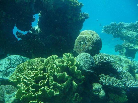 Underwater Observatory Marine Park : Nina Y