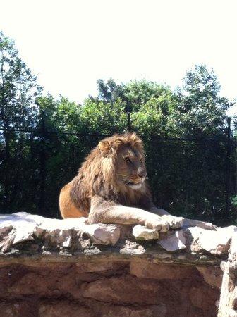 Falconara Marittima, Italië: Il Re.....!!!