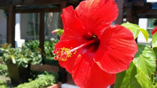 Somerset Ho Chi Minh City: beautiful gardens