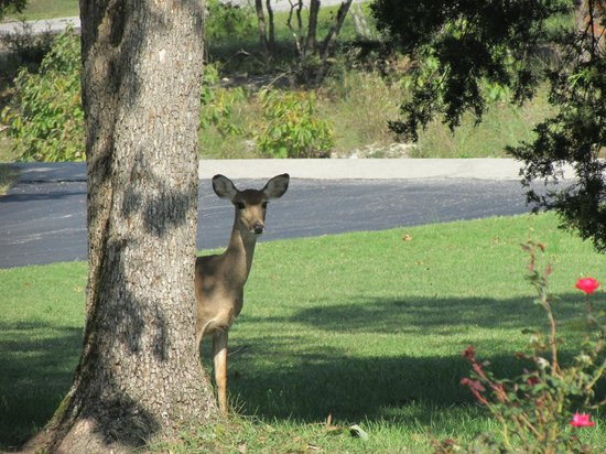 Golden Arrow Resort: Here's a friend that stopped by during our evening.