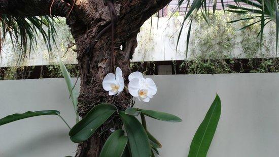 Sun Island Boutique Villas & Spa : les orchidées