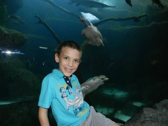 The Florida Aquarium: My son with 2 of the sea turtles in the background.