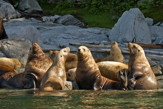 Sonora Resort : Sea Lions