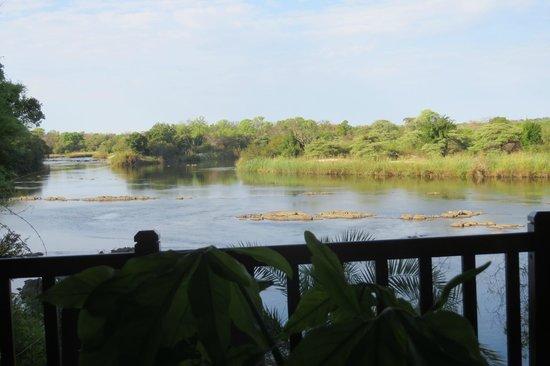 Divava Okavango Resort & Spa : View of the river