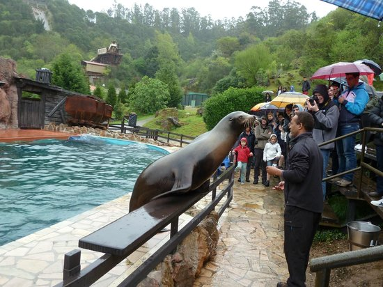 Cabarceno Nature Park: espectáculo lobos marino. mañana y tarde